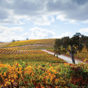 Paso Robles California Vineyard Stock Photography - Studio 101 West Stock Photography